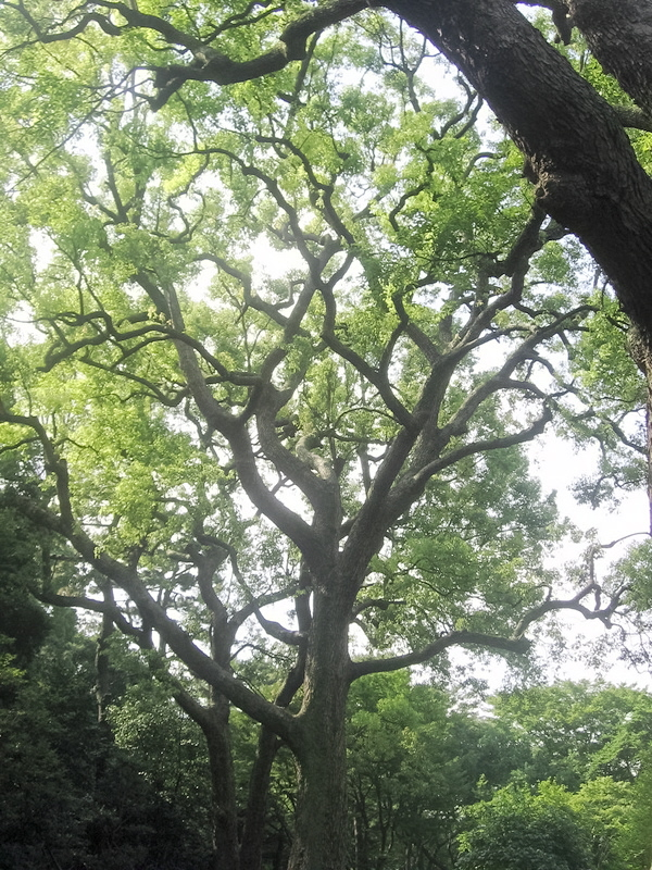 Rhythms Of Nature Without Booms >> About Japan A Teacher S Resource Japan S Forests Good Days And